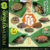 カプセルQミュージアム お財布カメ(50個入り)