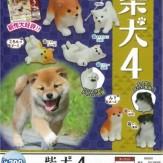 柴犬4(50個入り)