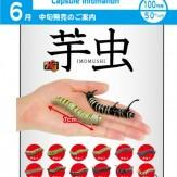 芋虫(100個入り)