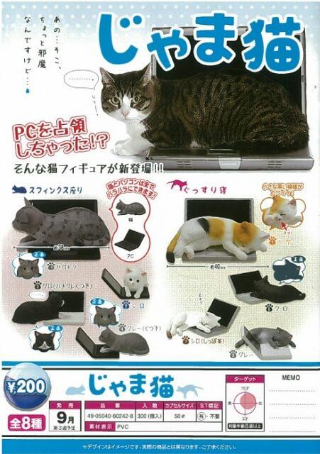 じゃま猫(50個入り)