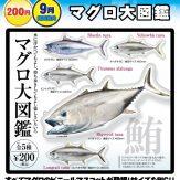 マグロ大図鑑(50個入り)
