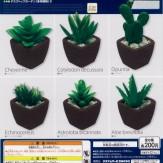 デスクトップガーデン[多肉植物]2(50個入り)