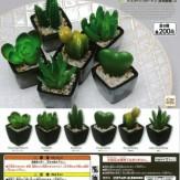 デスクトップガーデン[多肉植物]3(50個入り)
