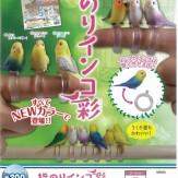 指のりインコ彩(50個入り)