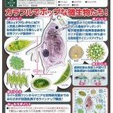 サイエンステクニカラー 微生物アクリルマスコット[仮](40個入り)