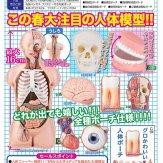 サイエンステクニカラー 人体解剖模型ポーチ[仮](40個入り)