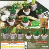 ミニチュアガーデン[多肉植物](40個入り)