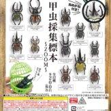 甲虫採集標本 ~ZOOM~(50個入り)