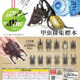 甲虫採集標本(50個入り)