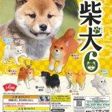 柴犬6(50個入り)