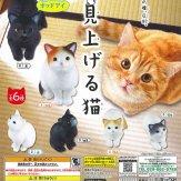 見上げる猫(50個入り)