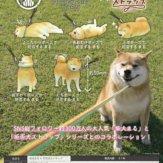 柴犬まる×拒否犬ストラップ(40個入り)
