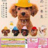 かわいい かわいい 犬の一年生(50個入り)