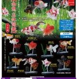 金魚立体図鑑 フル彩色フィギュア(50個入り)