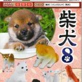 柴犬8(50個入り)