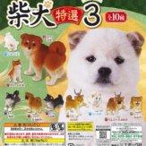 柴犬 特選3(50個入り)