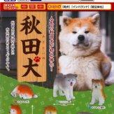 秋田犬(50個入り)