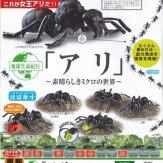 地球生命紀行「アリ」~素晴らしきミクロの世界~(50個入り)