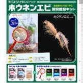 ホウネンエビ飼育観察キット(50個入り)