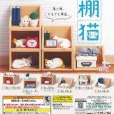 棚猫(50個入り)