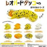 レオパードゲッコーおやすみシリーズ(40個入り)