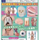 サイエンステクニカラー 人体解剖模型ポーチ(40個入り)