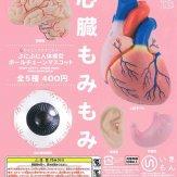 サイエンステクニカラー ぶにぶに人体模型ボールチェーンマスコット(40個入り)