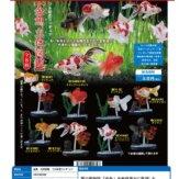 金魚 立体図鑑 フル彩色フィギュア(50個入り)