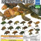 立体カプセル百科事典 原色爬虫類カメ目図鑑(40個入り)