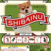 PUTITTO 柴犬(50個入り)