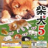 柴犬5(50個入り)