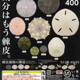 ネイチャーテクニカラーMONO PLUS 棘皮動物の裸殻マグネット&ボールチェーン(30個入り)