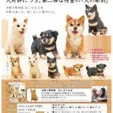 ART IN THE POCKET はしもとみお 犬の彫刻(30個入り)