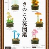 きのこ立体図鑑(30個入り)