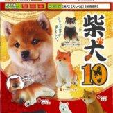 柴犬10(50個入り)