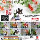フル彩色フィギュア 金魚 立体図鑑(40個入り)