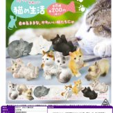 かわいい かわいい猫の生活(50個入り)