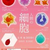 人間の細胞キーチェーン(50個入り)
