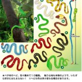 ペタペタ ヘビ図鑑(50個入り)