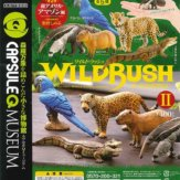 カプセルQミュージアム WILD RUSH 真・世界動物誌2 南アメリカ・アマゾン編(30個入り)