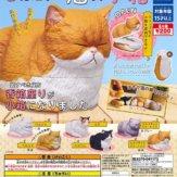 香箱座りの猫の小箱(50個入り)