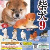 柴犬9(50個入り)