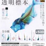 透明標本(40個入り)