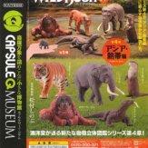 カプセルQミュージアム WILD RUSH 真・世界動物誌 第4弾「アジア・熱帯編」(30個入り)